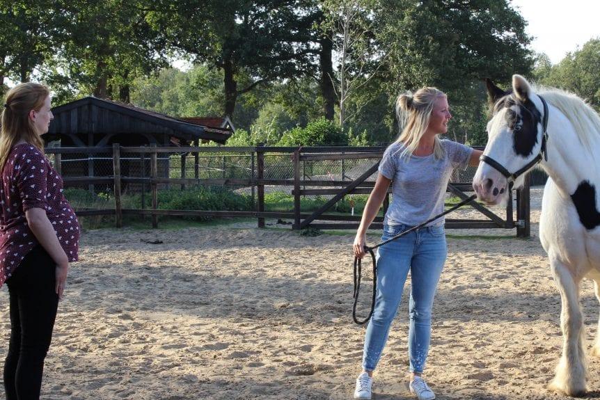 Persoonlijk Leiderschap & Spiegelen met paarden